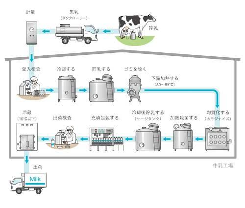 乳牛から牛乳出荷までの生産の工程