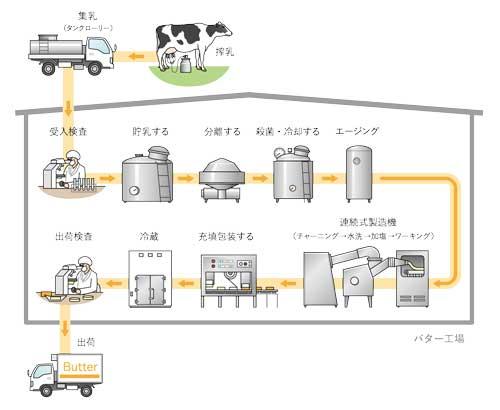 乳牛からバター出荷までの生産の工程