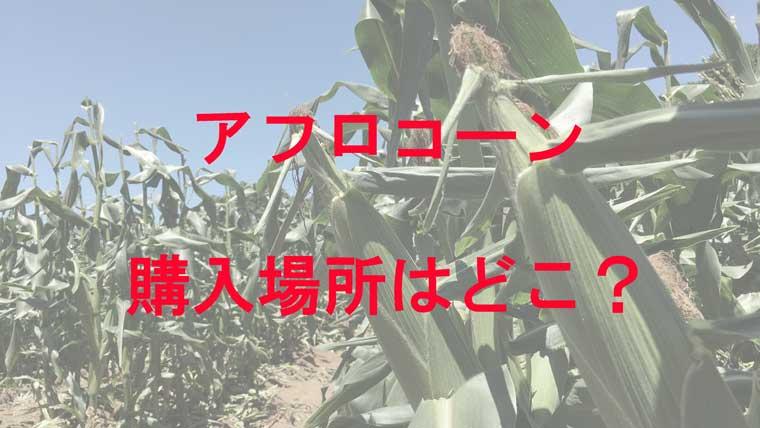 収穫を待つアフロコーン