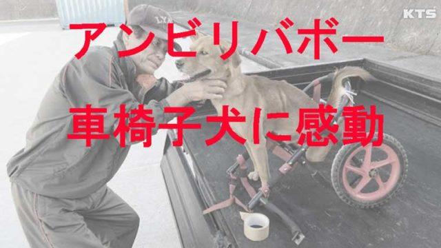 車椅子に乗った犬のラッキー