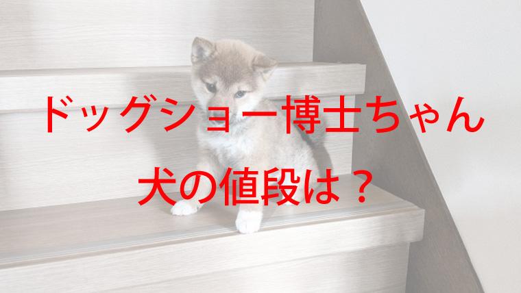 階段に座る子犬