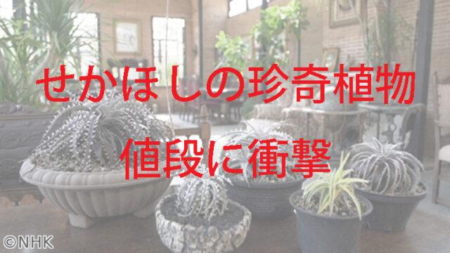 色々な種類の珍奇植物
